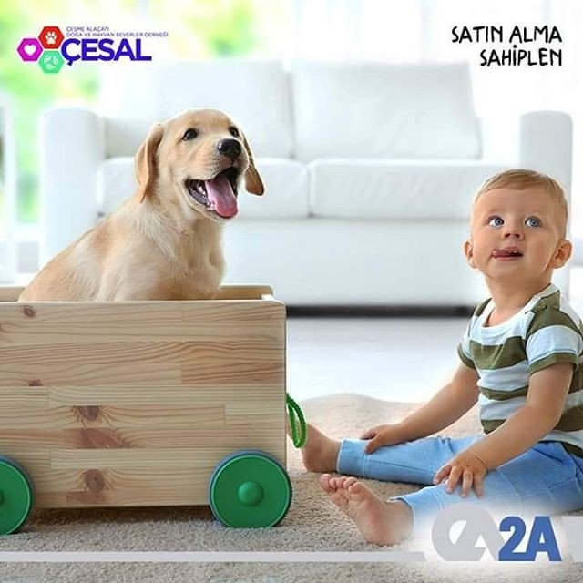 Araştırmalar, evde evcil hayvanlarla birlikte büyüyen bebeklerin çok daha güçlü bir bağışıklık sistemine sahip olduğunu gösteriyor. Sen de bir evcil hayvan sahiplen. 2A Mühendislik olarak @CESAL'ın destekçisiyiz. #2AMühendislik #CESAL #SatınAlmaSahiplen #BirKapSu #BirKapMama