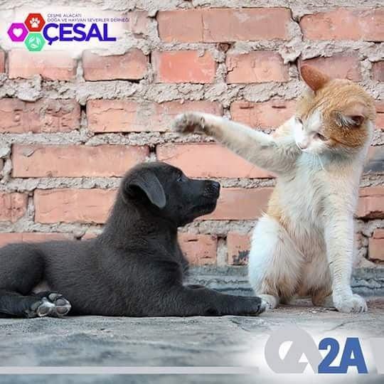 Dünyayı onlarla birlikte paylaştığımızın farkındayız! Doğa ve Hayvaseverler Derneği @ÇESAL 'ın destekçisiyiz. #SatınAlmaSahiplen